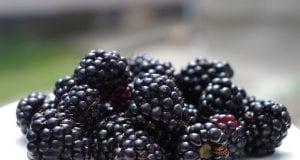 Can Hamsters Eat Blackberries