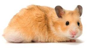 Hamster Diet & Nutrition Guide