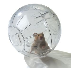 Hamster Ball Tips - 6 things to keep in mind when choosing hamster ball
