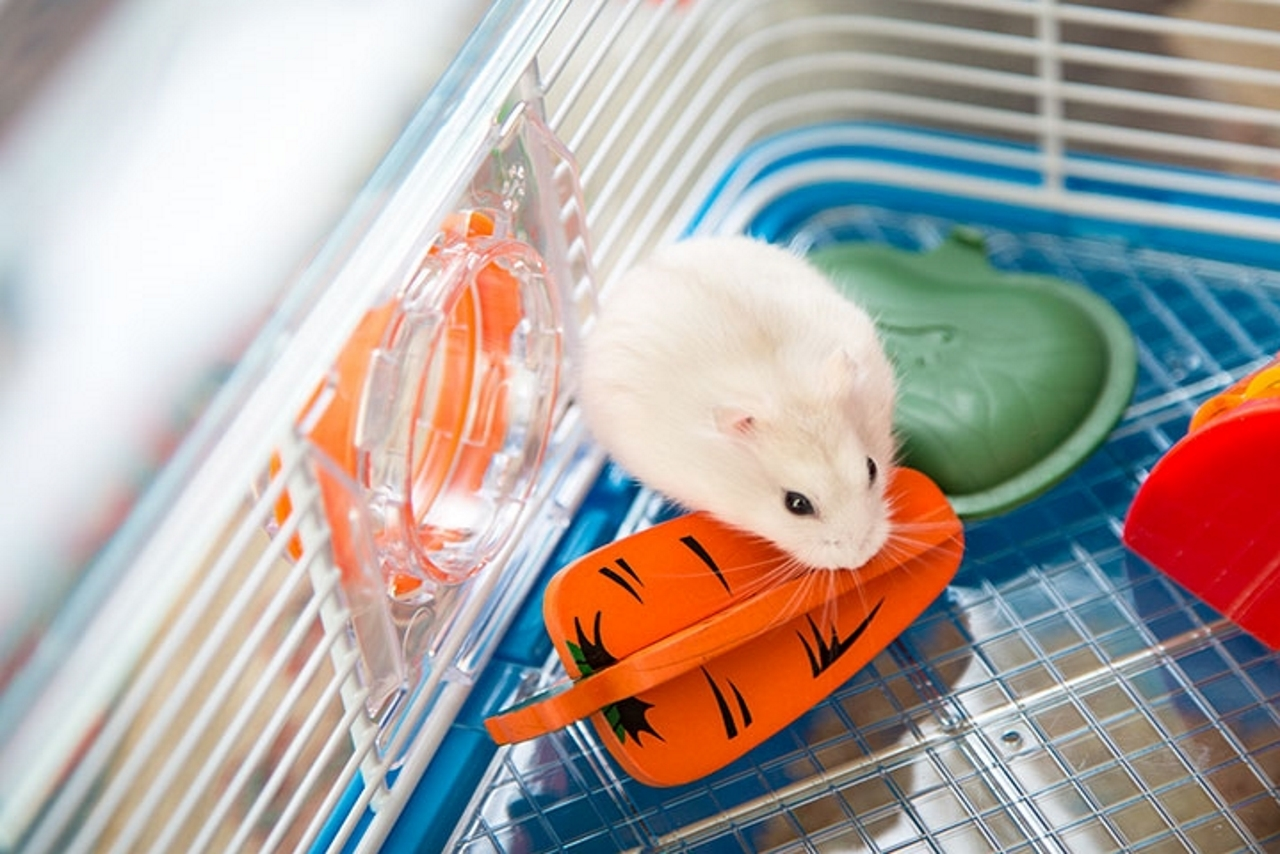Hamster Chew Toys - Hamster Toy Ideas