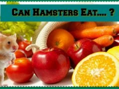 What Fruits can a Hamster Eat?
