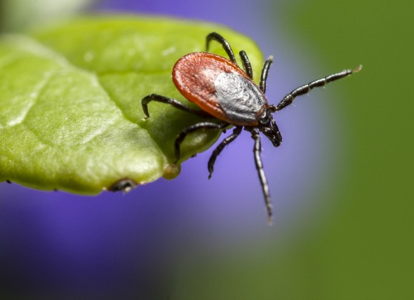 10 Facts about Ticks