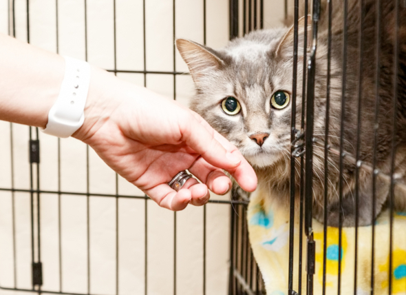 10 Signs of a Bad Animal Rescue