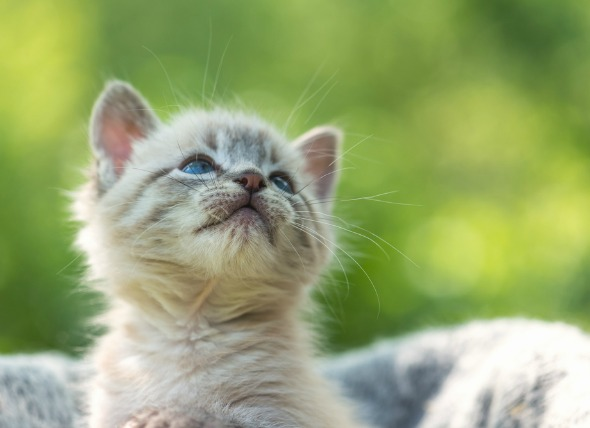10 Tips for a Happy and Healthy Kitten