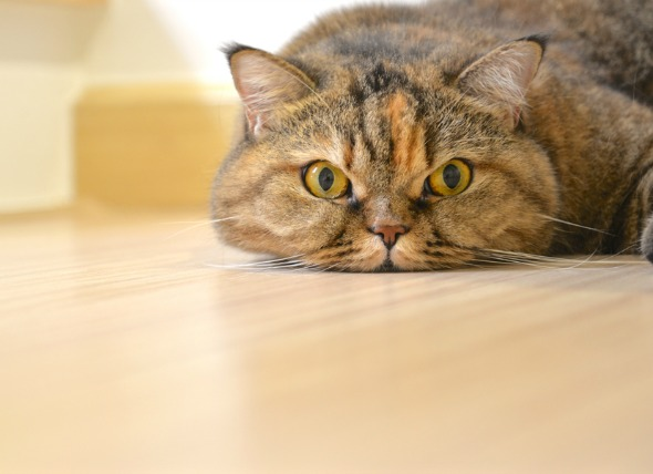 4 Common Home Remedies for Your Cat