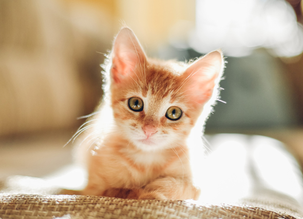 5 Top Tips For Naming Your Cat