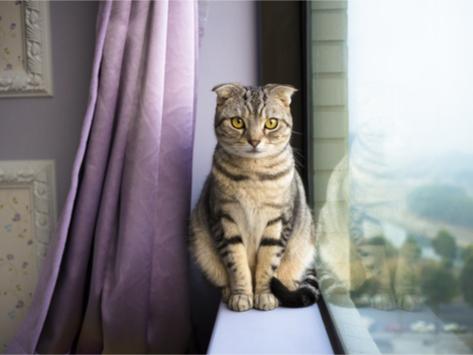 5 Ways Indoor Cats Can Get Fleas or Ticks