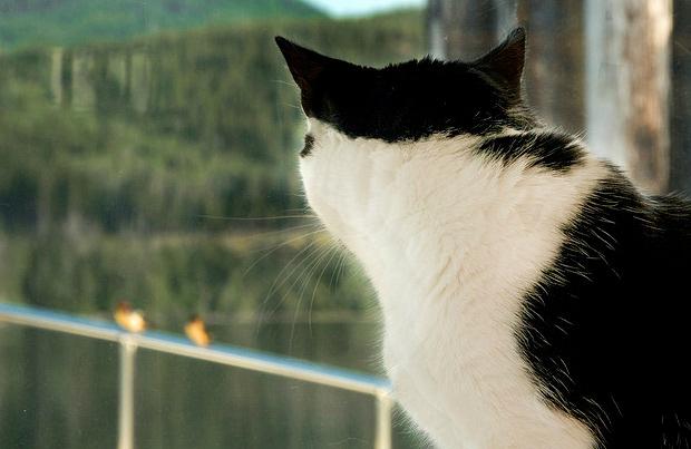 5 Ways to Keep Your Indoor Cat Purring