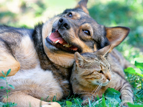 6 Ways to Go Natural With Your Pet