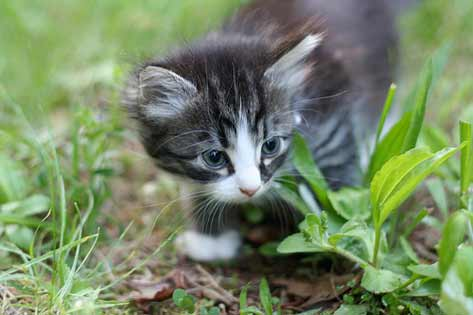 A Cat Lover's Guide: 6 Tips for Going 'Green'