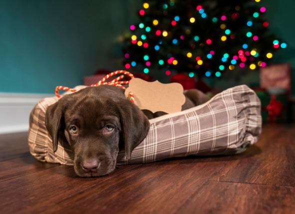 Are Christmas Pets a Good Idea?