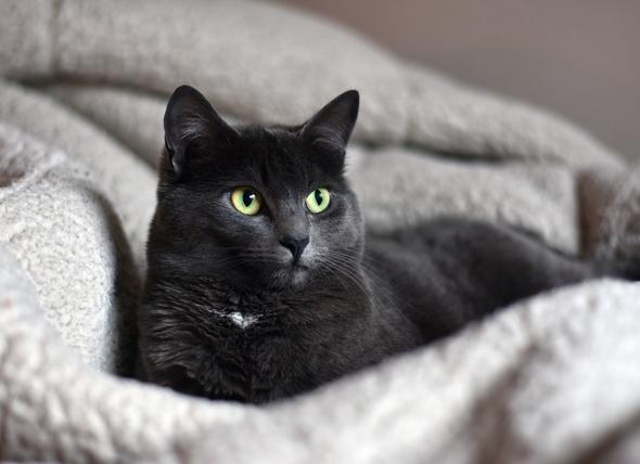 Arthritis Treatment for Cats