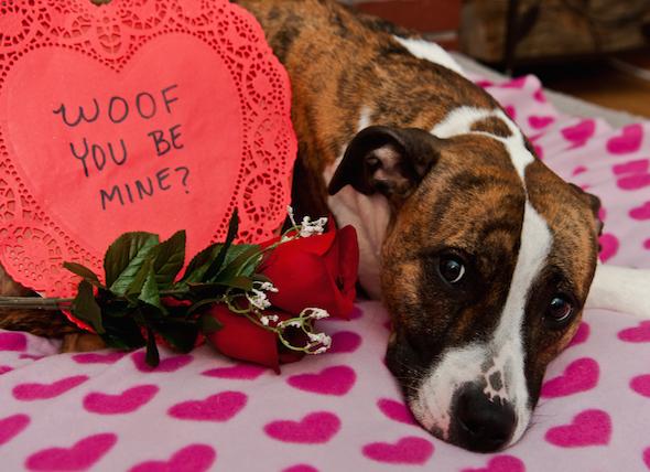 Be Kind, Valentine