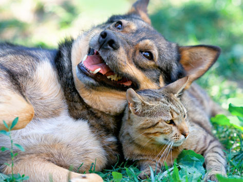 Can Cats and Dogs Live Peacefully Together?