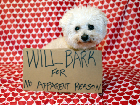Can Dogs Feel Embarrassed?