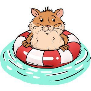 Can hamsters swim? And do they like swimming? 1