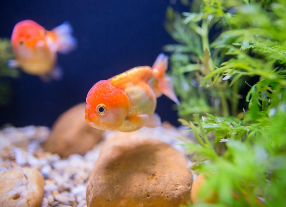 Caring for Your Fish When You're Away on Vacation