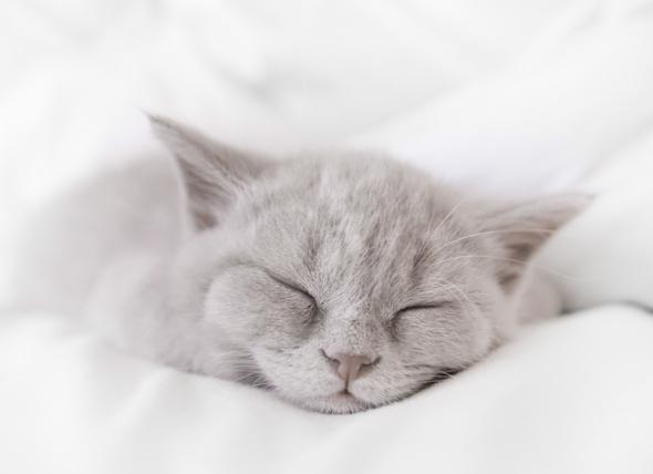 Cat Snoring: Is It Normal?