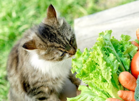 Do Carrots Naturally Improve Your Cat's Vision?