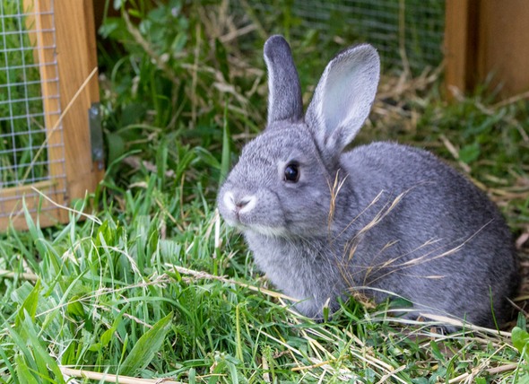 Do Small Pets Need Outdoor Time?