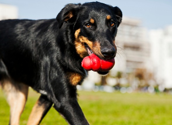 Dog-Tested, Trainer-Approved Dog Toys