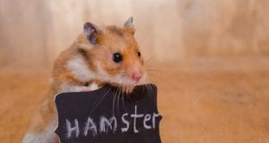 Hamster Care 101: How to take care of a hamster