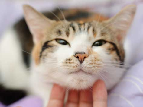 How Do Cats Show Love? Let Us Count Six Ways