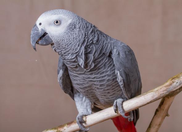 How Do I Train My Bird to Talk?