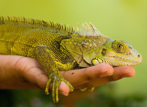 How do I Care for My Lizard?
