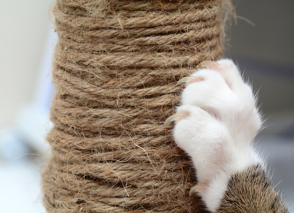 How to Keep a Cat From Scratching Furniture