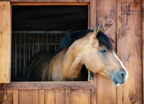Reduce Stall Boredom With a Few Best Practices and Key Horse Supplies