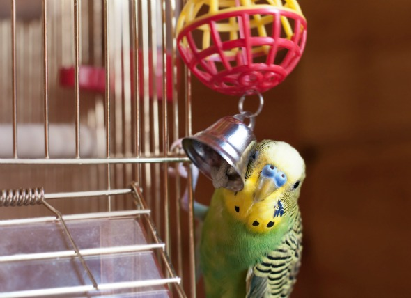 8 Things You Need to have Before Adopting a Bird