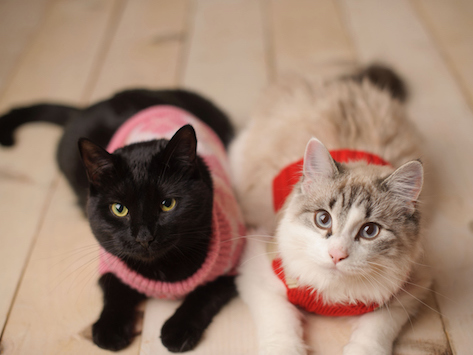 Sweaters for Cats: Do They Need Them?