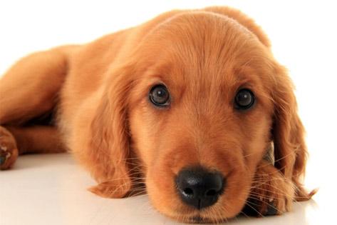 Your Puppy: Weeks 12-16, etc.