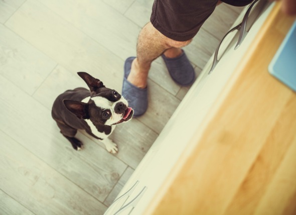 "3 Dog Behaviors You Can Accidentally ""Untrain"""