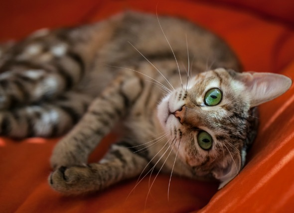 4 Ways to Keep Your Indoor Cat Entertained While You're Away