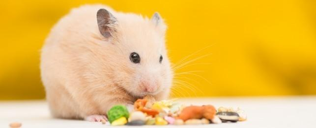 Hamster Care: Feeding your hamster