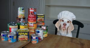 Chef Dog Makes Canned Food Casserole: Funny Dog Maymo