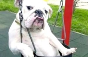 Funny Dogs Behaving Like Humans - Dogs Acting like Humans    BEST OF