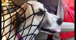 Dog Fails Top 10 Compilation #6