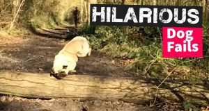 Ultimate Dog Fails Compilation - Try Not to Laugh