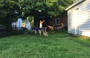 Frisbee Dog Fail