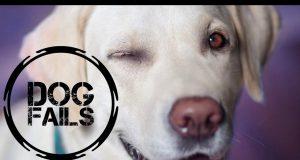 Dog Fails #2