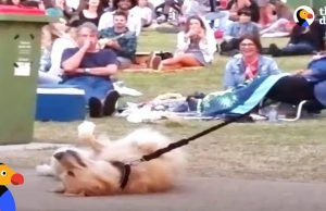 Dog PLAYS DEAD to Avoid Going Home While Park Crowd Watches   The Dodo