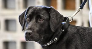 Dog Fails Explosives Training At The CIA And Now The Agency Has Other Plans For Her