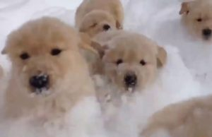 Epic dogs in snow - Funny compilation 2018