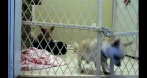 Puppy Escape Fail [FUNNY]