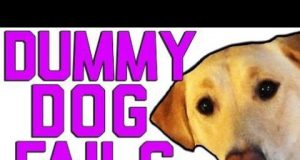 "Dummy Dogs || ""Dog Fails"" By FailArmy HD"