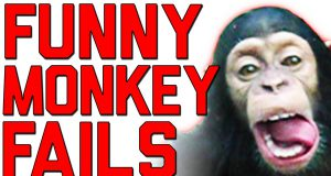 The Ultimate Funny Monkey   Monkey Fails   FailArmy