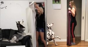Dog Reaction to Magic Trick with Blanket - Funny Dog Reaction to Magic Trick Compilation
